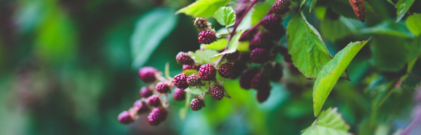 healthy-nature-bush-leaf (2)